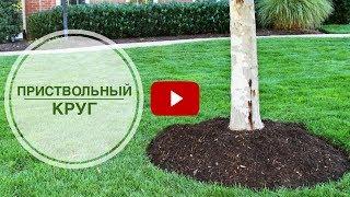 видео Приствольные круги вокруг деревьев