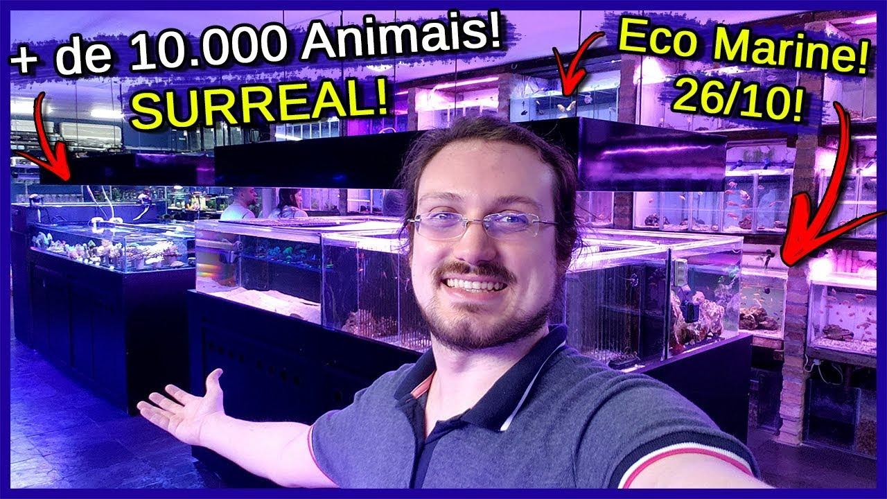 Vai Rolar um dos Maiores EVENTOS de Aquarismo do Brasil! - Eco Marine - 26/10