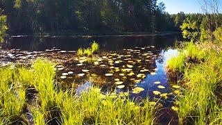 ВОТ КТО ЖИВЕТ В ЛЕСНОМ ОЗЕРЕ РЫБАЛКА на блесны и воблеры СПЛАВ по реке УСТЕ