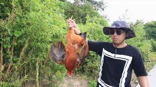 【野食小哥】誰讓你是一隻雞呢?