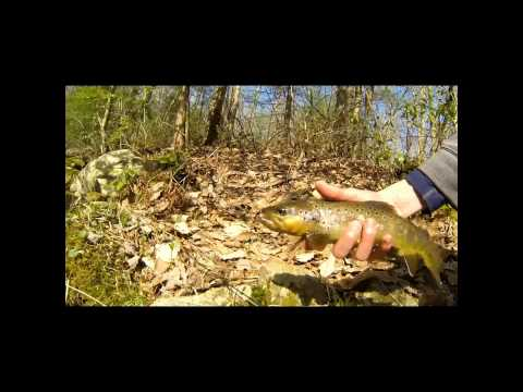 PA Native Brook Trout Fishing