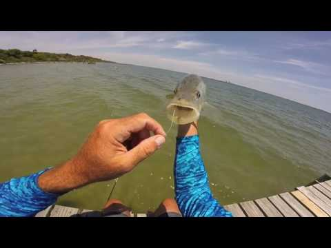 Jensen Beach Sight Fishing Indian River Snook