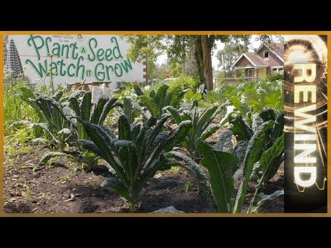 Motown To Growtown: Detroit's Urban Farming Revolution | REWIND