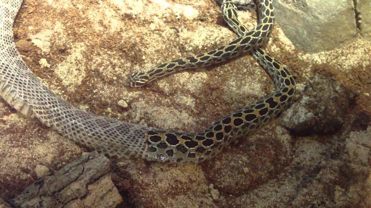 Snake Blog  My Stories About Snake Removal