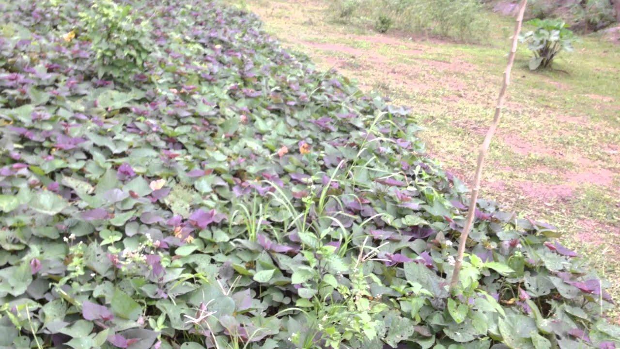 Magtanim Ng Gulay (Vegetable Garden) - Doc Liza Ramoso-Ong Tips #8