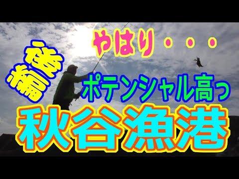 釣り動画ロマンを求めて 220釣目(後編:秋谷漁港)