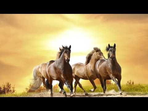 Muaz bin Cebel (r.a.) - Haramı Helali En İyi Bilen Sahabi - Sahabe Hayatları