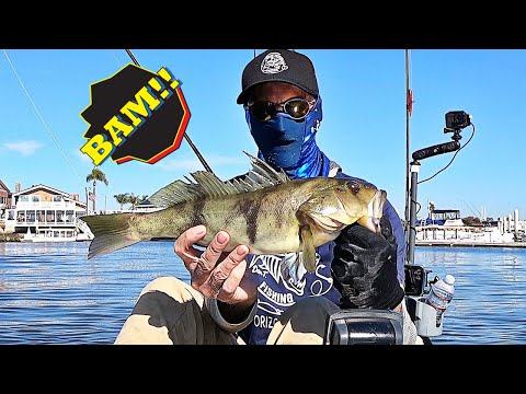 Sand Bass And Spotty Kayak Fishing Action In Huntington Harbour!!