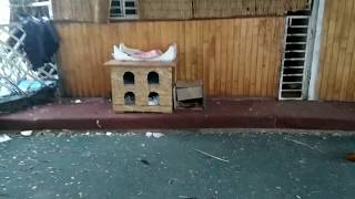 Одесса. Хостел для котов.
