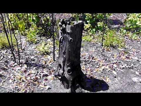 Kulaluk Heritage Totem Road Preliminary Survey 2017