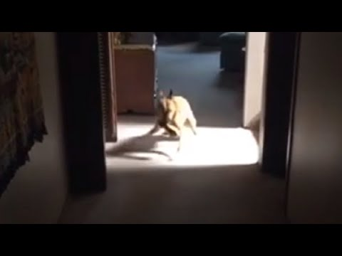 Dog doesn't understand how to play fetch