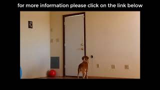 "Develops your Dog's ""Hidden Intelligence"" 