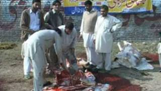 Video Charsadda Eid ul Azha Ejtemai Qurbaniyan download MP3, 3GP, MP4, WEBM, AVI, FLV Agustus 2017