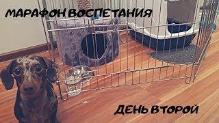 Марафон воспитания день второй/отношения с кошкой