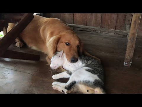 My lovely dog playing with cat at home