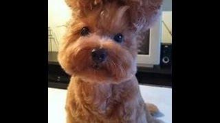смешное видео про животных ржака до слёз