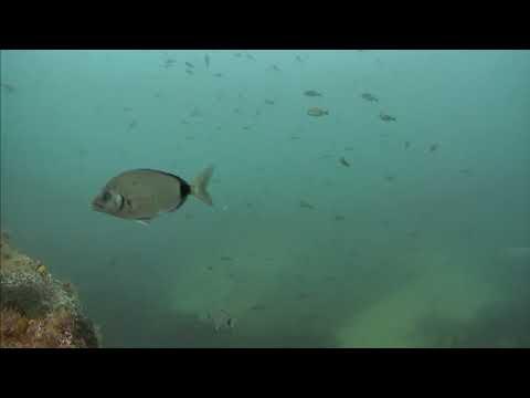 Sharks in the Atlantic Cam 05-21-2017 14:00:10 - 14:59:52