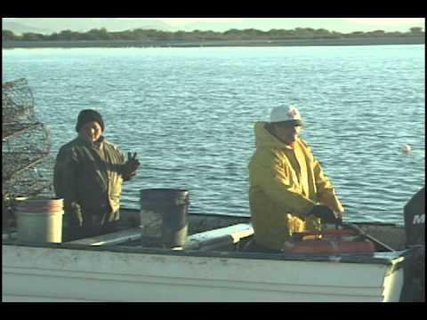 """Tastiota Mexico 2012 """"Crab Fishing"""" """"Jaiba Pescando"""""""
