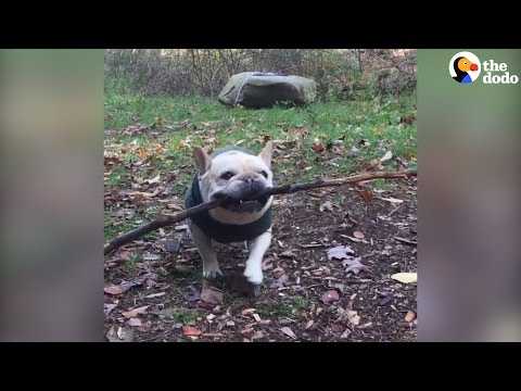 Dogs Who Are Proud Of Their Sticks | The Dodo