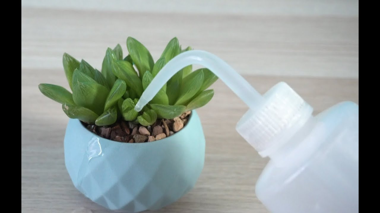 How And When To Water Succulents Youtube