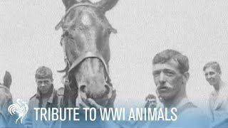 Animals in War (WWI) - a tribute