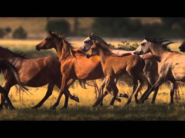 Impresionante caballos en la naturaleza HD mp4