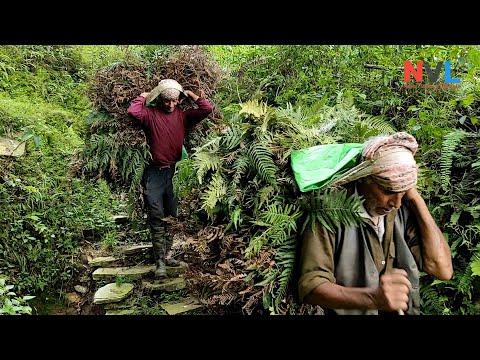 Rural Life In Nepal | Farmers Real Traditional Activities In Pahadi Region | Nepali Village Life