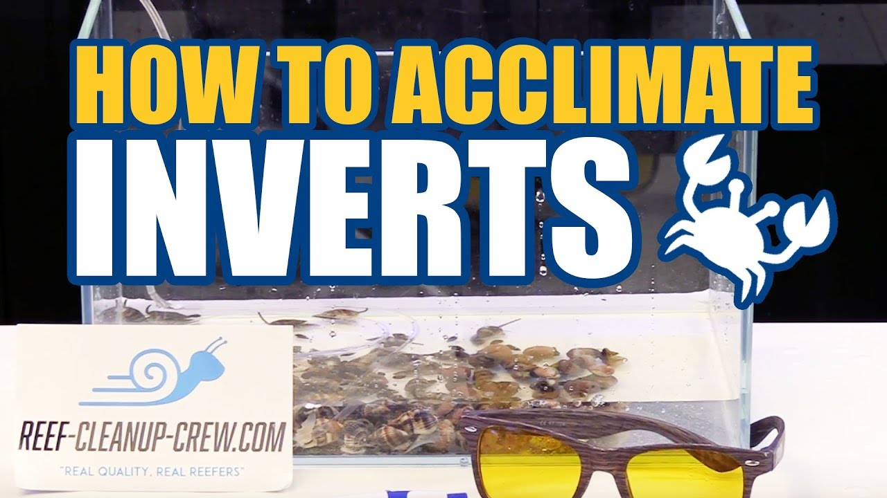 How to Acclimate Clean Up Crew Invertebrates To Your Reef Aquarium Thumbnail