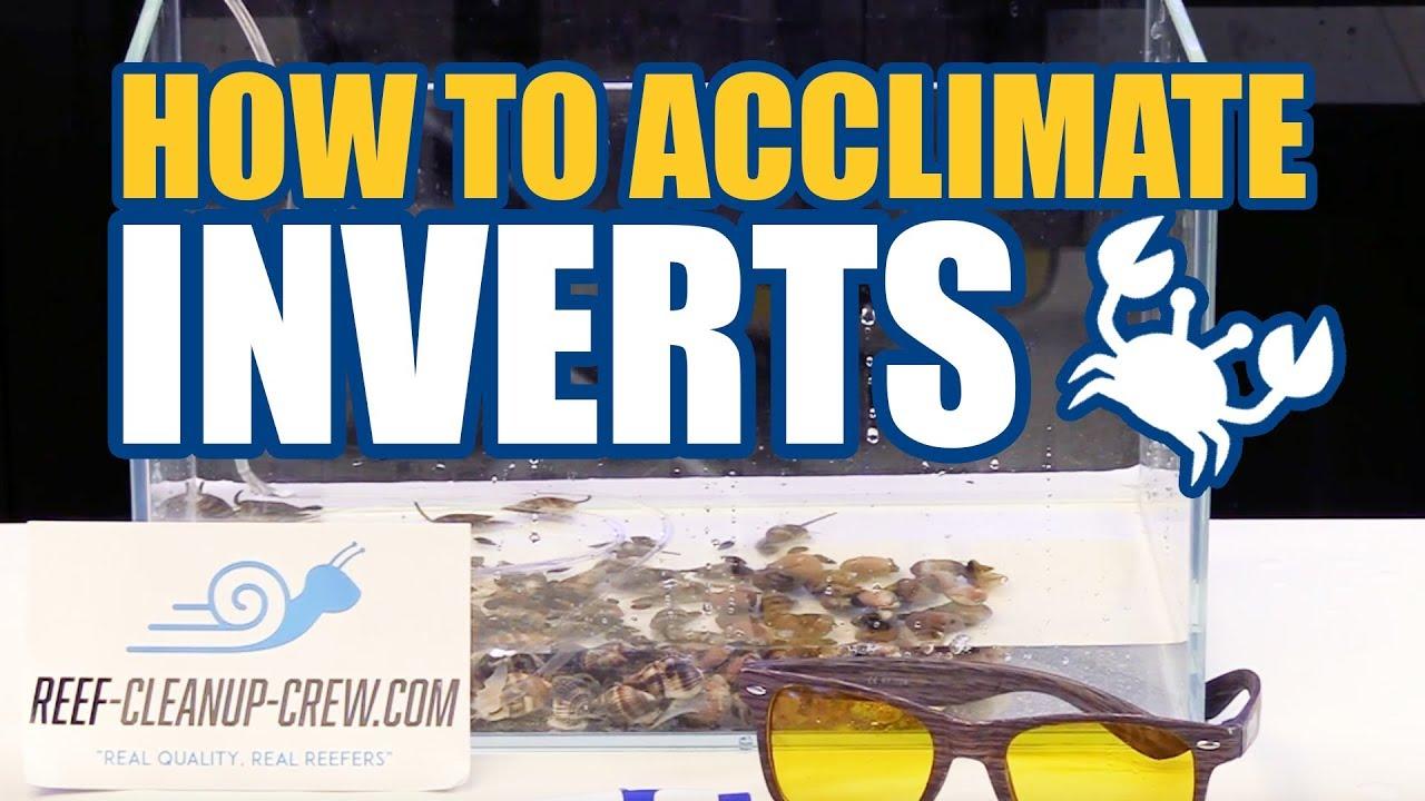 How to Acclimate Clean Up Crew Invertebrates To Your Reef Aquarium Thumbnail