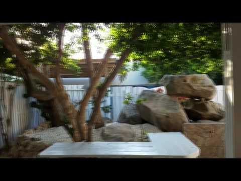 Flying Fishbone In Savaneta Aruba