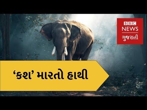 India : Ever come across a 'Smoking Elephant'? (BBC News Gujarati)
