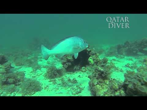 Qatar Diver Spearfishing with mix shot in ALAUDID