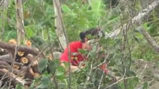Barangay Guinsaugon,Saint Bernard Southern Leyte,Philpiines 6 years ago