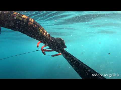 Pesca submarina de Lubinas con Epsealon Striker Pro
