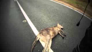 Hitting a Kangaroo at 109kmph on a motorcycle