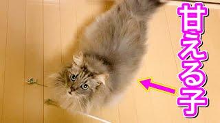 ツンデレ猫のおねだりの仕方が可愛すぎた