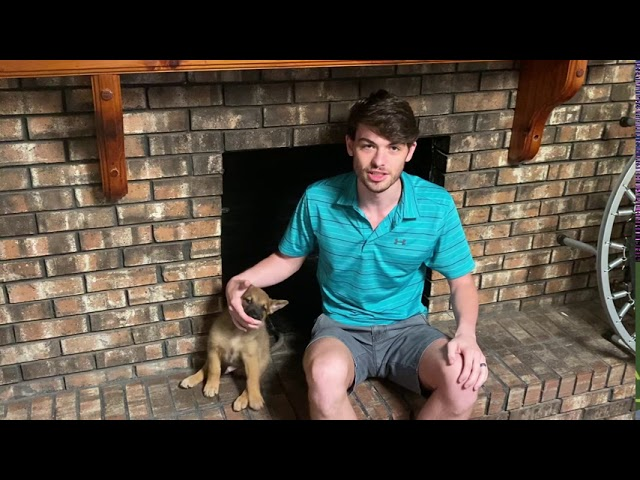 Animal Chimney Removal | Sootmaster Fireplace & Chimney Sweep