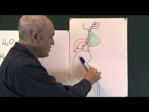 Body Fluids 8, Water Balance Regulation And Homeostasis