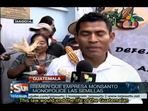 "Guatemala: Peasants and indigenous people reject ""Monsanto Law"""