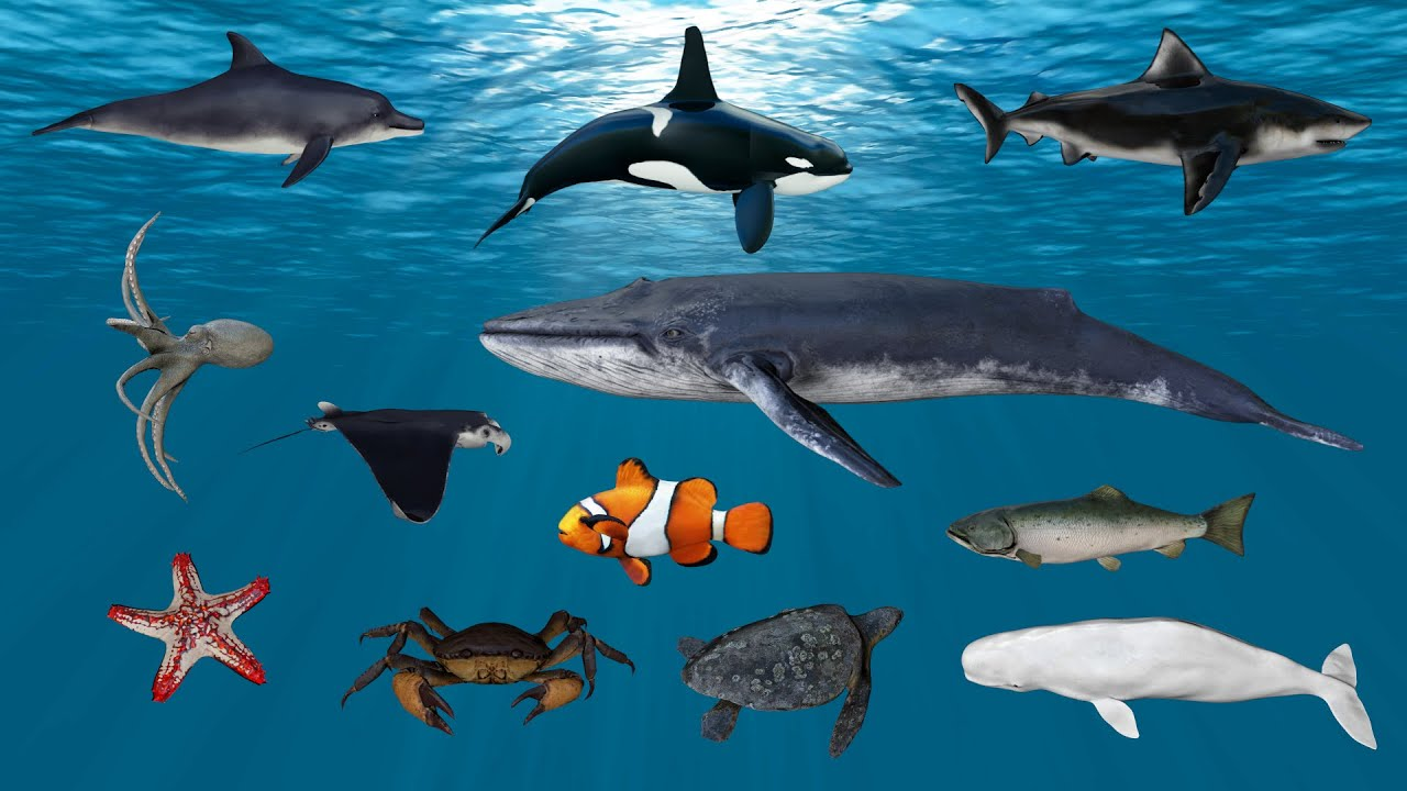 Learn Sea Animals Find the shadow of sea animal friends Shark Dolphin Whale Ocean Fish Turtle│Toycoo