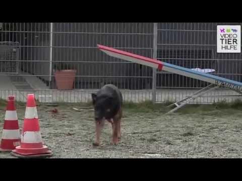 Sie sucht Ihn Erotik | Seitensprungnetz.de von YouTube · Dauer:  1 Minuten 38 Sekunden