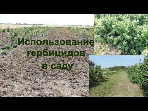 Использование гербицидов в саду. Использования глифосатов в саду