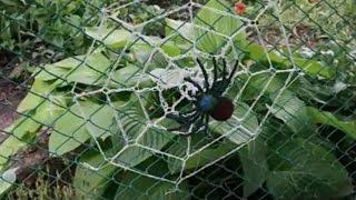украшаем сад пауком с паутиной