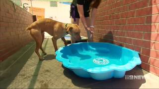 Hot Weather | 9 News Perth