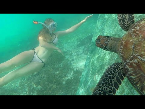THE UNDERWATER PARADISE OF THE PHILIPPINES ! Moalboal Sardines&Turtles