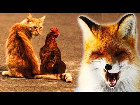 Вопрос: Почему разные виды животных могут дружить друг с другом?