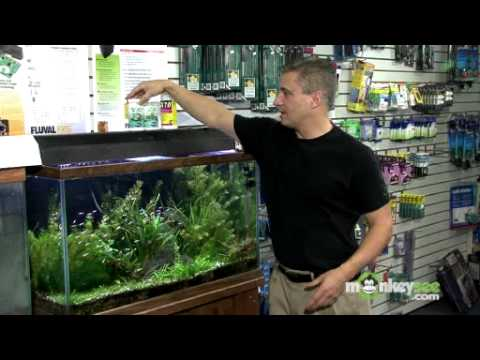 Maintaining the Temperature and pH Balance in Your Aquarium