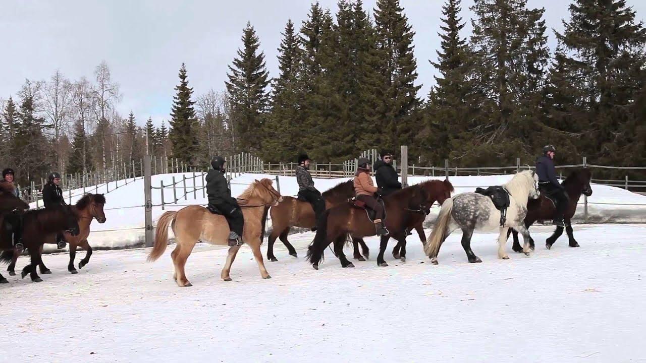 Mesna Activities & Accommodation - Horseback riding