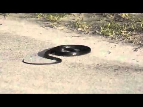 Snake Dancing Donatella - Lady Gaga