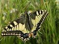 Les papillons de Malras